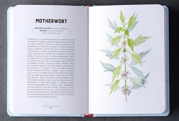 Motherwort watercolor