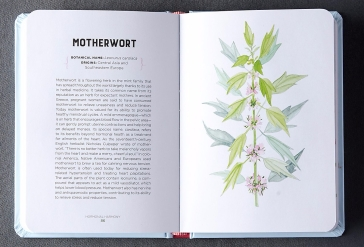 Motherwort watercolor