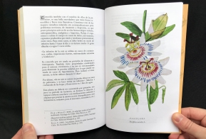 Del Cuerpo a las Raices Pasiflora / Passionflower