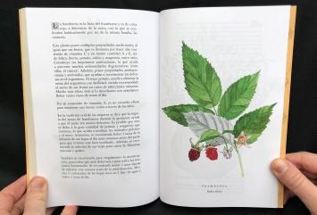 Del Cuerpo a las Raices Frambuesa / Raspberry