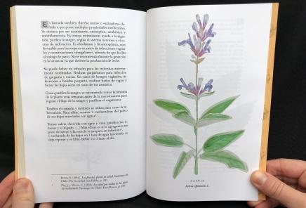 Del Cuerpo a las Raices Salvia / Sage