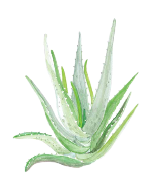 Nature's Remedies Book: Aloe